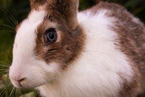 Bunny Rabbit #6
