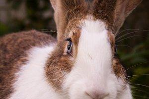 Bunny Rabbit #7