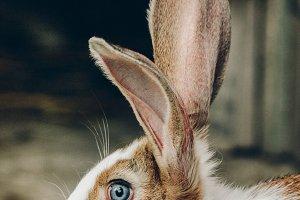Bunny Rabbit #9