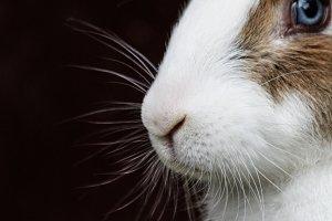 Bunny Rabbit #11