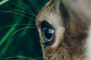 Bunny rabbit #12