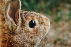 Bunny rabbit #13