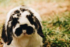 Bunny Rabbit #14