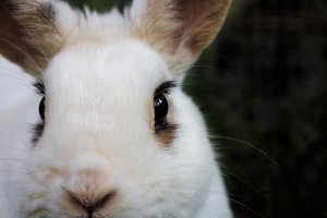 Bunny rabbit #15
