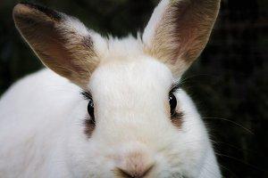 Bunny Rabbit #16