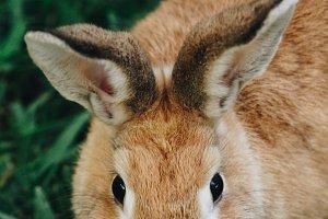 Bunny Rabbit #17