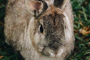 Bunny Rabbit #19