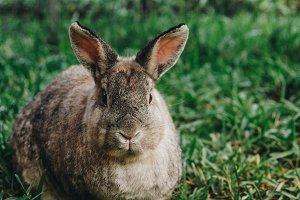 Bunny Rabbit #20