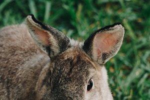 Bunny Rabbit #21