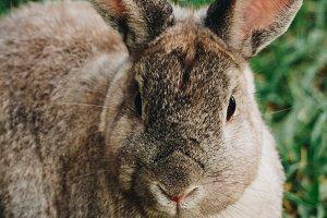 Bunny Rabbit #22