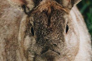 Bunny Rabbit #23