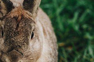 Bunny Rabbit #25
