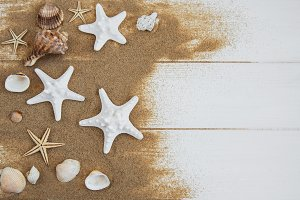 sea shells with sand
