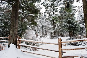 Wooden house at pine trees forest co