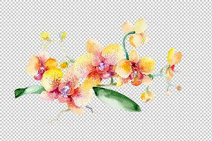 Bouquet yellow orchid flower PNG set
