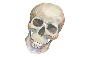 One skull PNG watercolor set