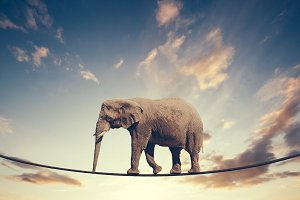 Elephant walking on a line on the sk