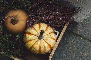 Different kinds of pumpkins inside a