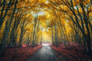 Amazing autumn forest in fog