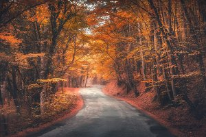 Amazing autumn forest with road