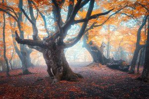 Beautiful fairy forest in fog in aut