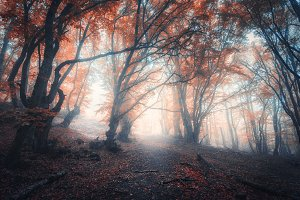 Beautiful fairy forest in fog
