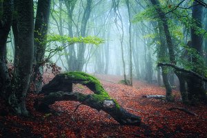 Scary autumn forest in fog