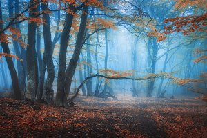 Mystical autumn forest in blue fog