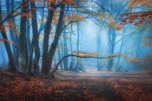 Mystical autumn forest in blue fog
