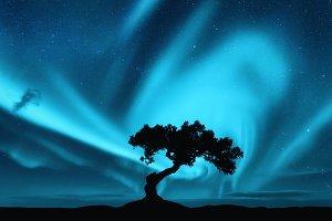Aurora borealis and tree