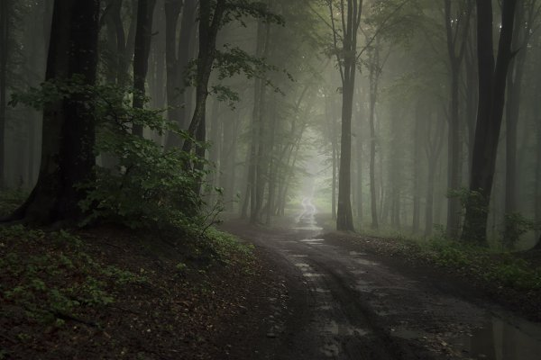 Stock Photos - Forest road with fog