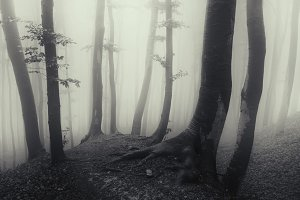 Spooky forest on Halloween