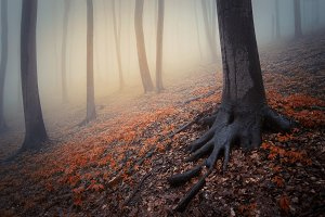 Autumn woods background