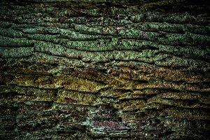 Old Wood(rind,bark) Tree Texture Bac