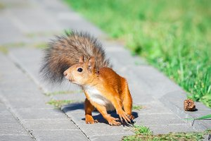a squirrel with a nut