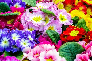 Closeup image of Beautiful flowers.