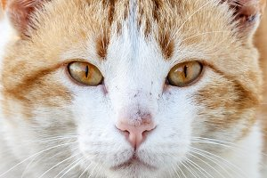 Close-up portrait of a cute cat