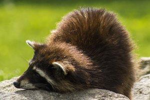 Just look at my fur