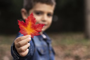 Cute boy shows a leaf in autumn