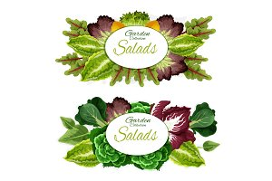 Salad leaf vegetables and plants