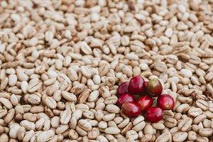 Arabica gayo coffee natural process