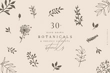 Hand Drawn Botanical Collection by  in Illustrations