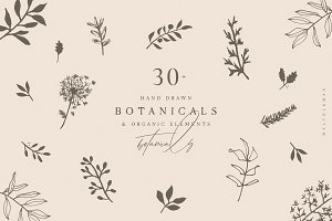 Hand Drawn Botanical Collection