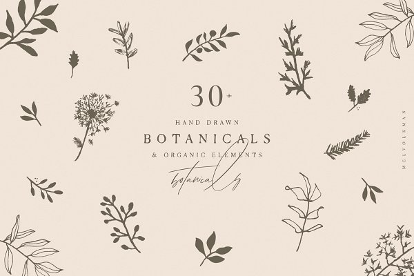 Illustrations and Illustration Products: Mel Volkman - Hand Drawn Botanical Collection