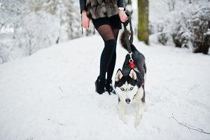 Husky dog on a leash at hand of girl