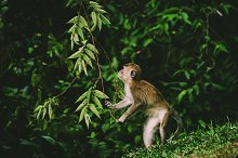 Monkey by  in Animals