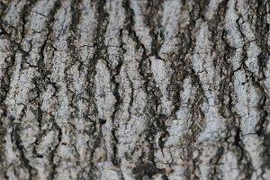 Tree Body Texture