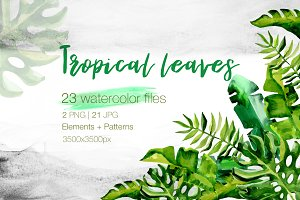 Succulent Tropical leaves PNG set
