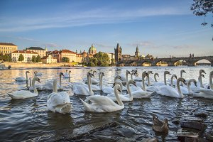Charles Bridge and old town in