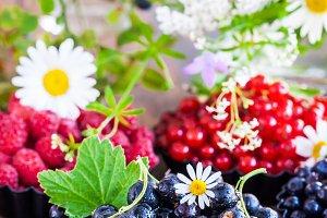 Fresh ripe summer berries - black cu